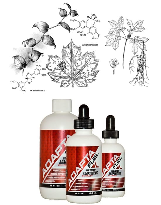 adaptogenic herbs and bottles of adapta-fuel